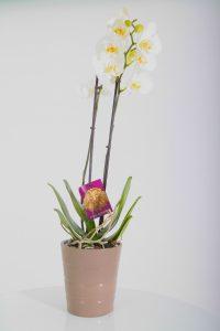 photo-orchidée